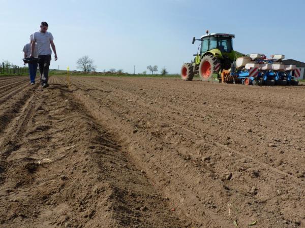 Comptage densité de semis sur labour