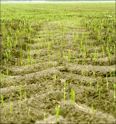 Diminution de la compaction des sols